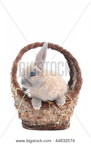 Cute baby bunny with blue eyes in basket, isolated on white