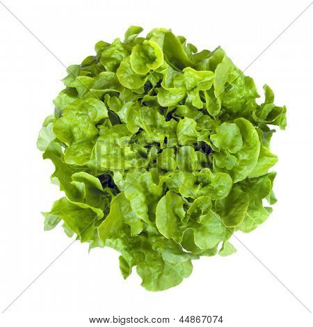 Curly leaf or butterhead lettuce, isolated on white.  Overhead view.