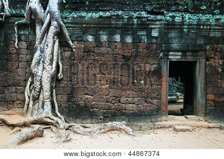 Ta Phrom roots and doorway