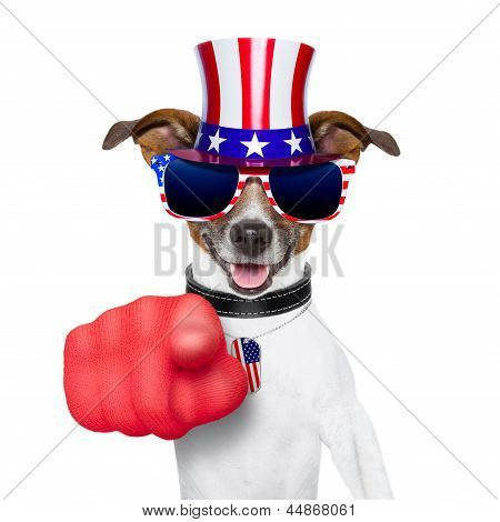 Usa American Dog