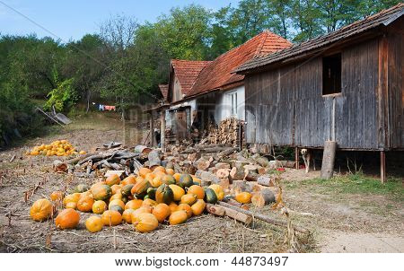 Pumpkins in a village courtyard