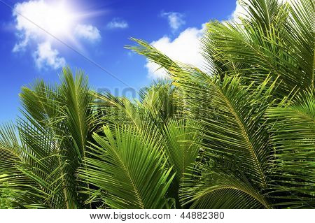 Green Palm Lush On Blue Sky Background.