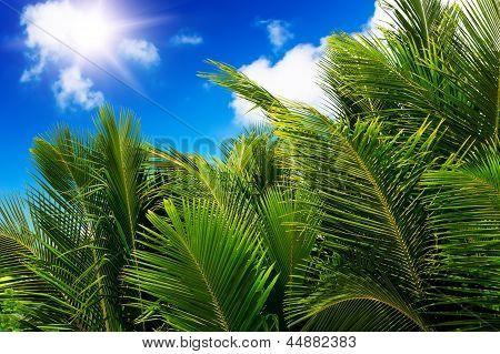 Green Palm Lush On Blue Sky Background.