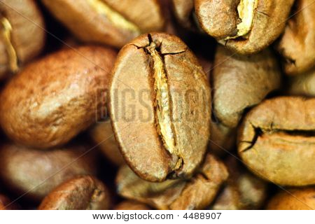 Coffee Been Close-up