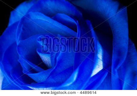 Rosa Blu / Blue Rose