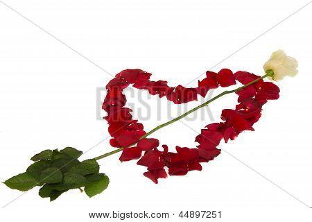 White Rose Piercing Petal Heart