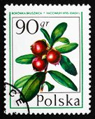 Postage Stamp Poland 1977 Cranberry, Forest Fruit