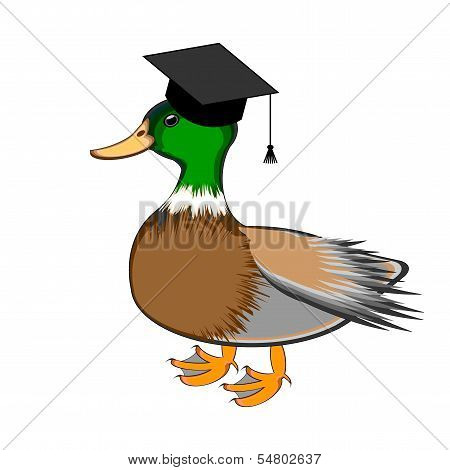 A Funny Duck In A Graduation Cap