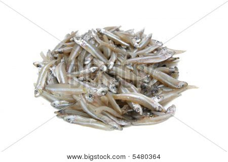 Fresh_anchovy