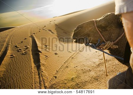 Riding On Desert