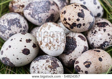 Small Group Of Dappled Quail Eggs