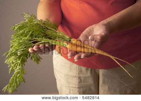 Two Freshly Picked Young Carrots Complete With Green Tops
