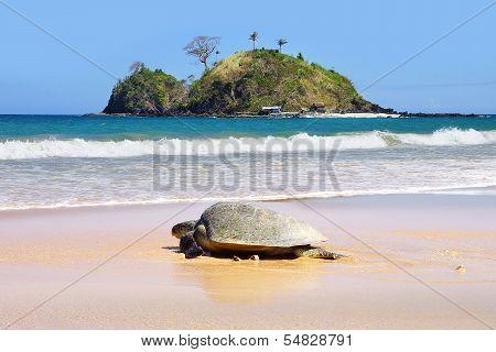 Sea turtle on beach. El Nido