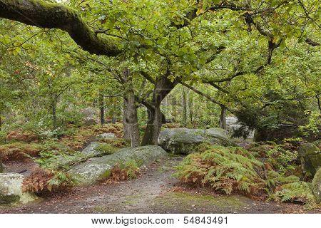 Forest Of Fontainebleau, Seine-et-marne, Ile De France, France