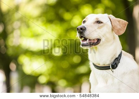 Mixed Breed Dog Outdoor Portrait