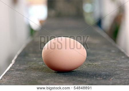 Eggs Laid On The Floor.