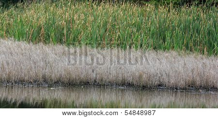Levels Of Water Vegetation At The Shore Of A Lake: Yellow Grass And Green Reed