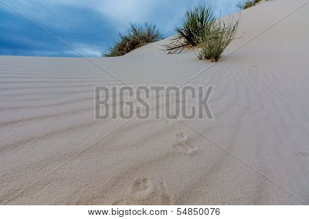 Tracks in the Wind Ripples of the Amazing Surreal White Sands Of New Mexico