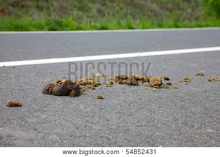 Horse excrement on the asphalt surface