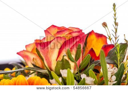 Background Of Vivid Orange Roses