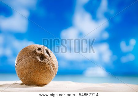 coconut with ocean , beach and seascape, shallow dof