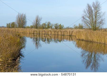 Reed along a tranquil lake at fall