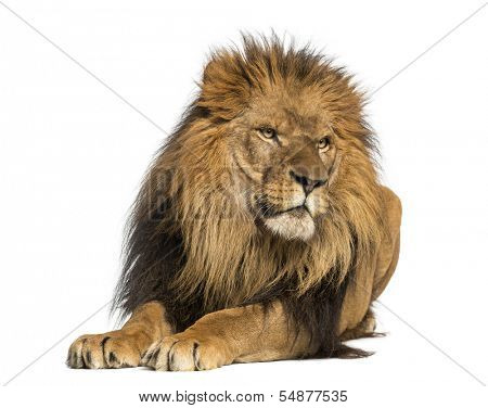 Lion lying down, looking away, Panthera Leo, 10 years old, isolated on white