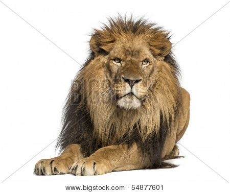 Lion lying down, facing, Panthera Leo, 10 years old, isolated on white