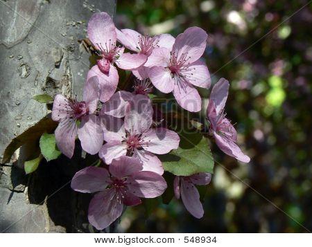 Pink Tree Flowers