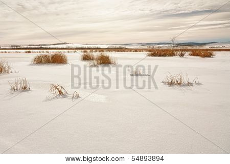 Snow Covered Marsh