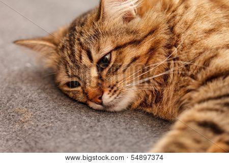nice cat