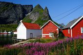 stock photo of reining  - Traditional wooden houses against mountain peak in Reine village - JPG