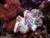 picture of coral reefs  - underwater coral reef animals basking in the sun - JPG