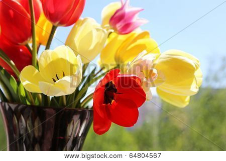 Bouquet Of Colorful Spring Tulips In A Vase