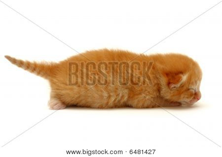 Kitten On The Floor Isolated On White