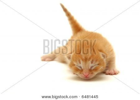 Red Kitten On The Floor Isolated On White
