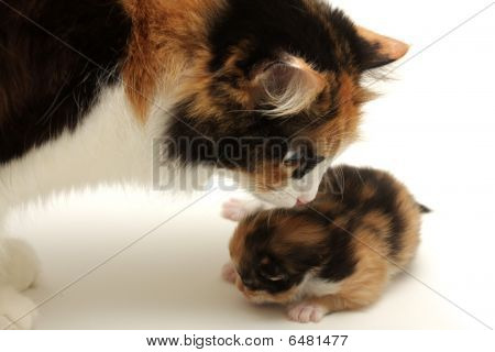 Attentive Mother With Kitten