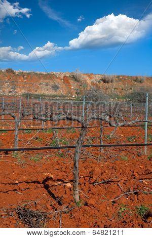 Winter leafless vineyard field in Utiel Requena of Valencia Spain