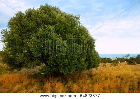 Sierra de Irta in Castellon province with sea view Spain