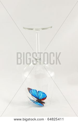 Glass with blue butterfly