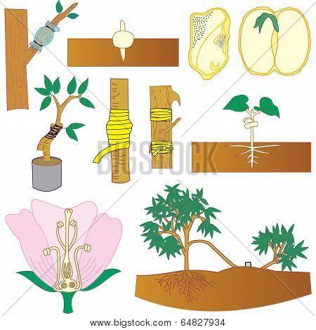 Plant Tree Vector