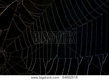 Refracted Light On A Dewy Spider Web