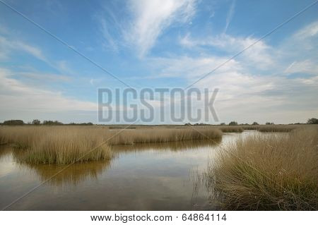 Wetland Landscape. Tablas De Daimiel. Ciudad Real. Spain.