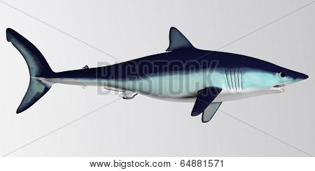 Mako Shark Side Profile