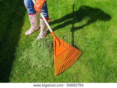 Woman raking freshly cut grass in the garden