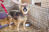 image of stray dog  - A dog in an animal shelter - JPG