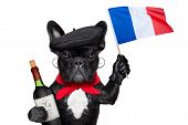 foto of french beret  - french bulldog with red wine waving flag of france - JPG