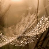 stock photo of cobweb  - Cobweb in the morning light, manual lens photo