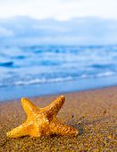 image of starlet  - Under the Sun Sea Starlet - JPG