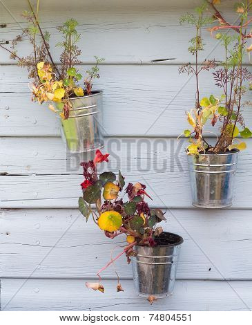 Plant pots on wooden background